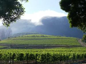 constantia-valley-4