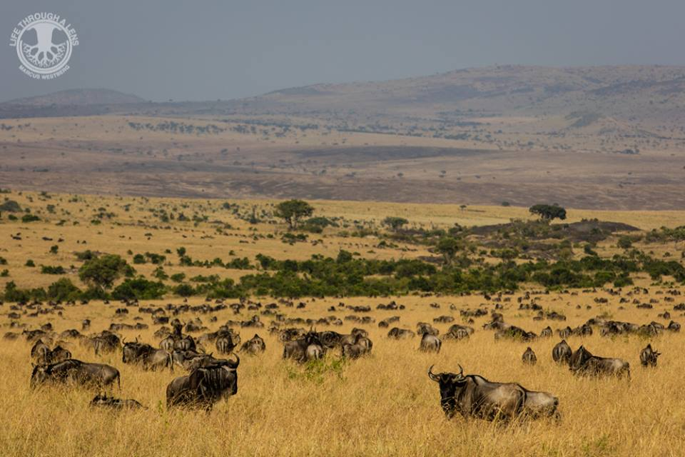 Quênia ♥ Lua de Mel ♥ TM Travel